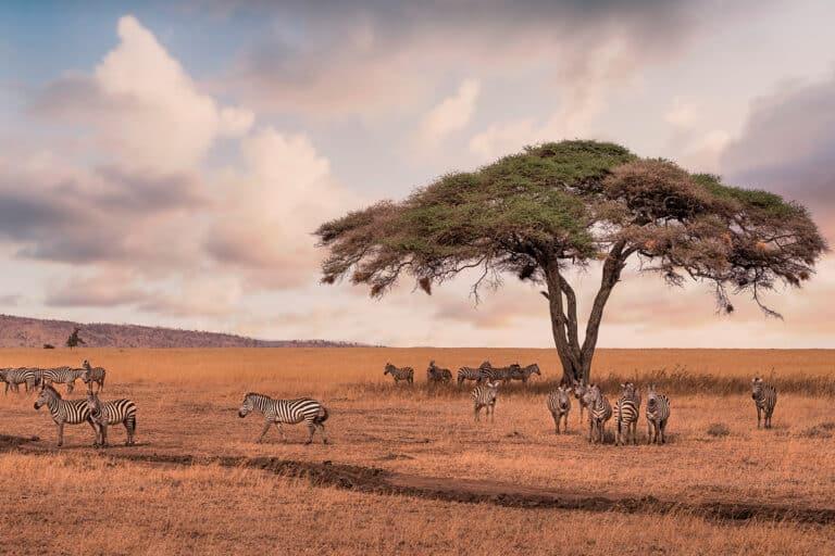 Una experiencia única: safari en Tanzania